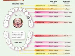همه-چیز-در-مورد-دندان-های-شیری-شیرخوار-ترتیب
